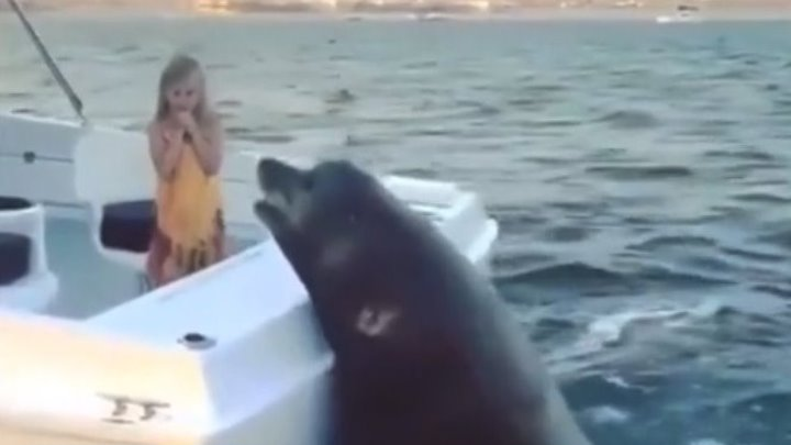 Рыбки хочет...!
