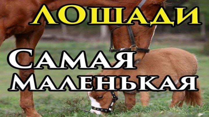 Всё про лошадей. Какая лошадь самая маленькая в мире?