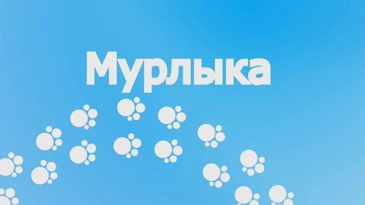 С.Трандафилов - Мурлыка