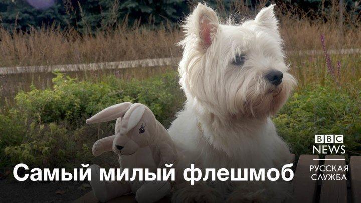 Пес Джейк и плюшевый заяц из IKEA