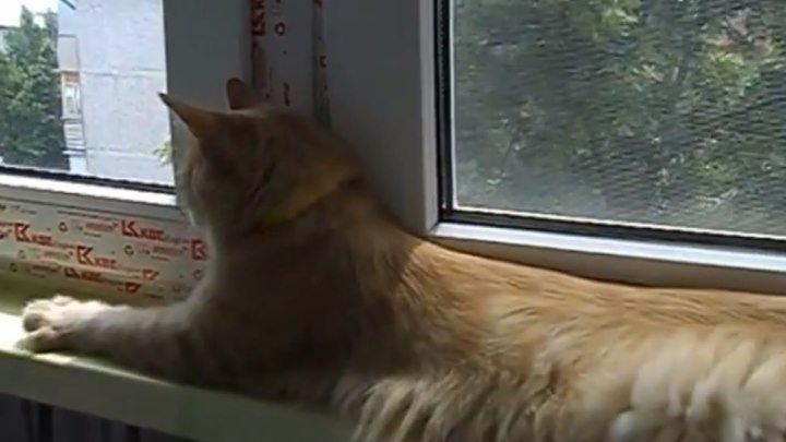 Кошка умеет лаять! Вот это прикол!