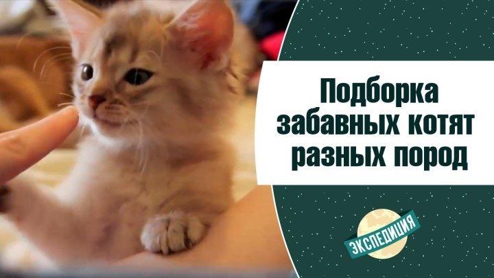 Подборка котят разных пород