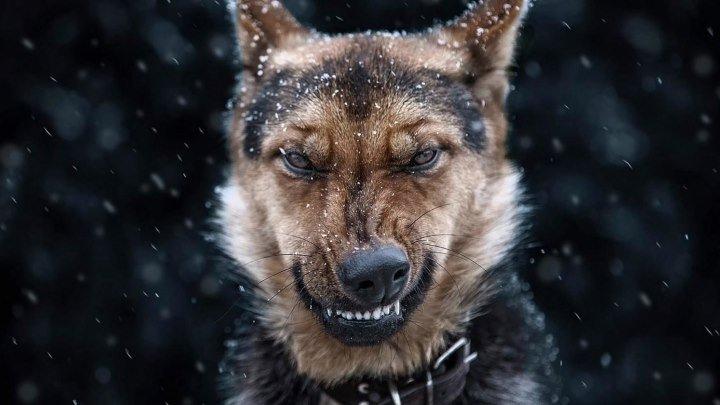 Вот это собака