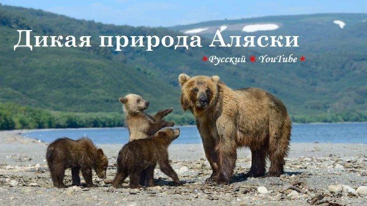 ❖ Дикая природа Аляски HD ⋆ Русский ☆ YouTube ︸☀︸