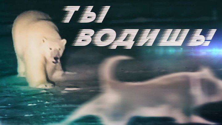 Белый медведь и собака устроили догонялки на Аляске