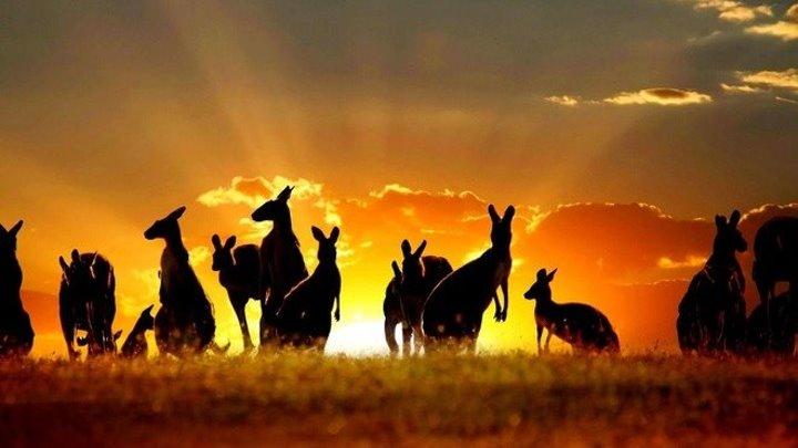 Кусто - Австралия