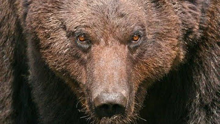 Купил костюм медведя и ни о чём не жалею