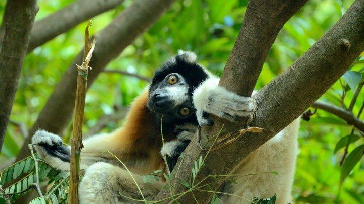 Кусто - Мадагаскар 1
