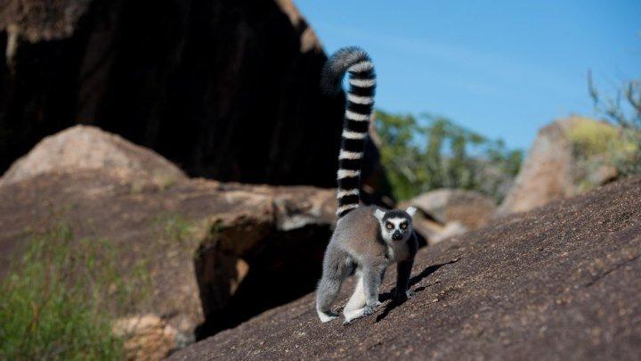 Кусто - Мадагаскар 2