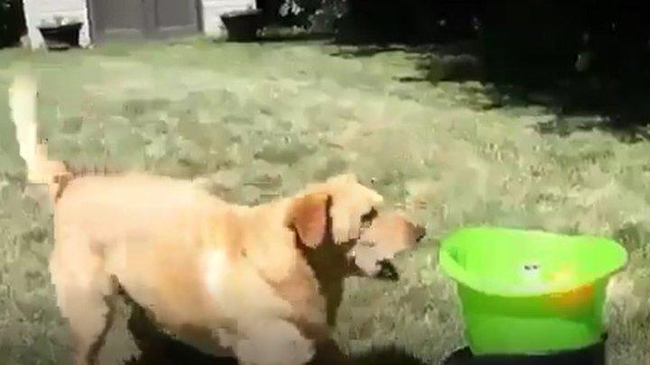 Собака отлично освоила новую игру...)