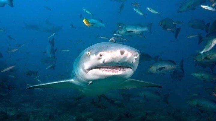 Царство больших акул (2018). документальный