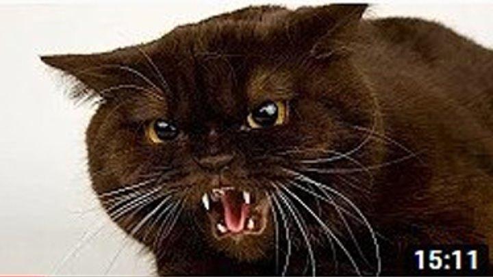 Потешные коты! Сборник приколов про котов