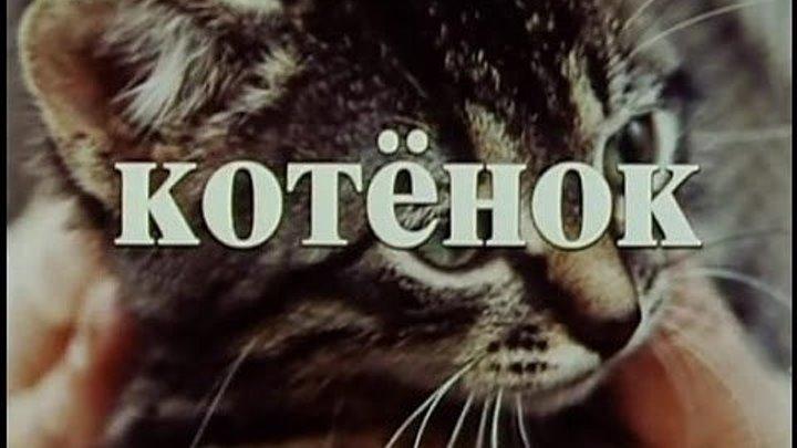 """х/ф """"Котенок"""" (1996)"""