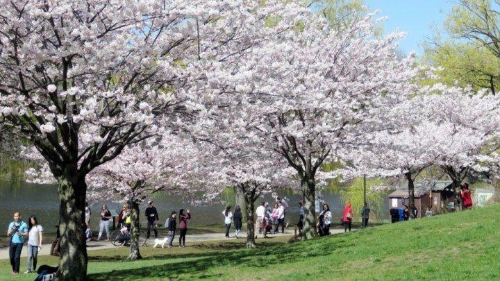 Весна в парках Онтарио (Канада)