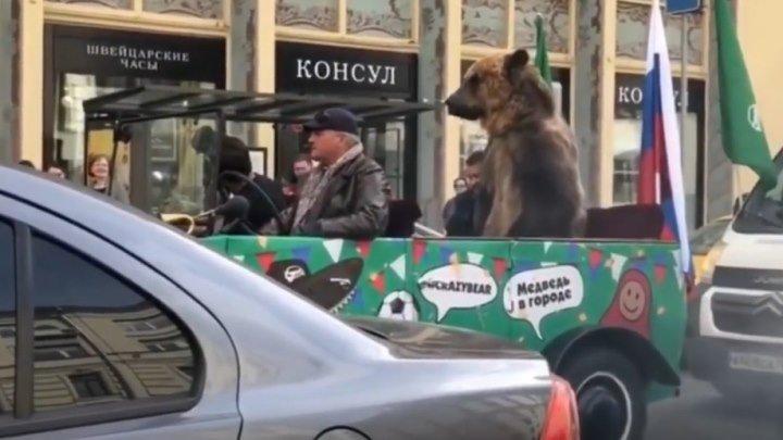 Медведь в пробке. Москва. Вот, что значит, медведи по улицам ходят!