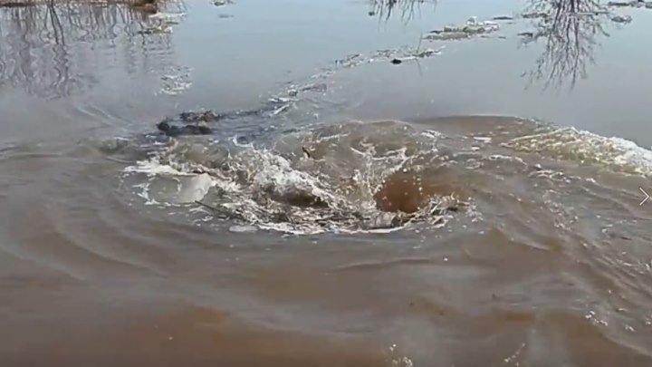 Чудовищный водоворот! Удивительное явление