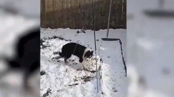Урок лепки снеговика от песика..))
