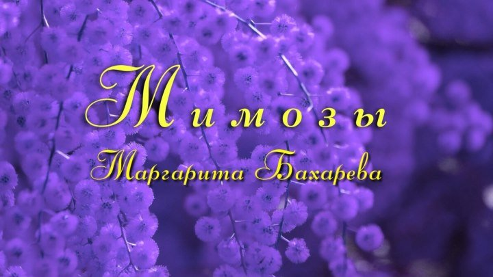 Премьера песни МИМОЗЫ Маргарита Бахарева