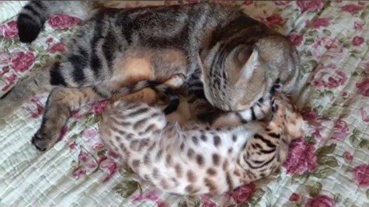 Коты, Любовь и Дружба