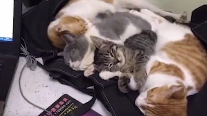 Классные, умные, забавные! Подборка кошек