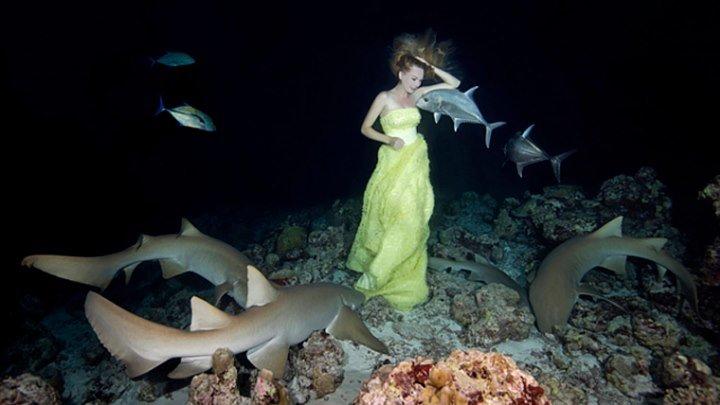 Бал с акулами