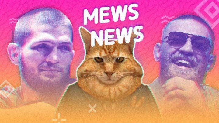 Mews News: Толстые коты и пушистые бои