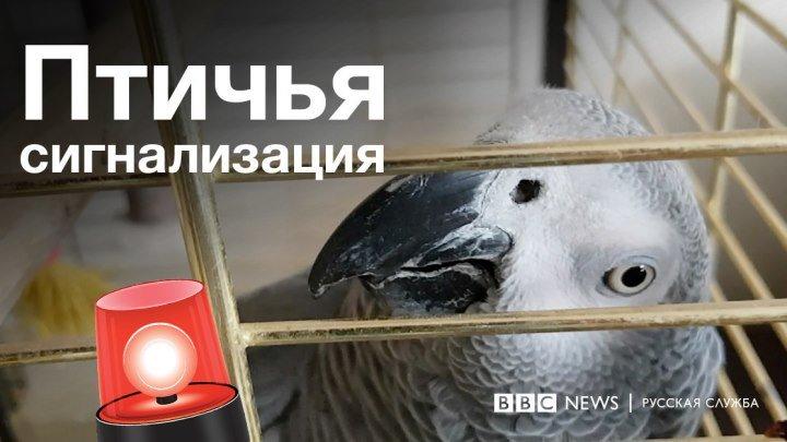Попугай имитирует пожарную сигнализацию