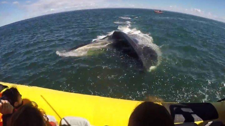 Огромный кит проплыл прямо под лодкой с туристами..