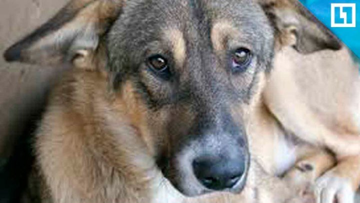 Расстрелял стаю бездомных собак