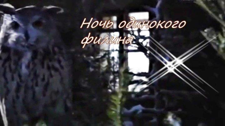 Русская мелодрама «Ночь одинокого филина»