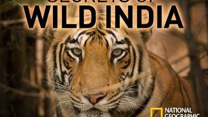 Тайны дикой природы Индии: Короли джунглей/ NG: Secrets of Wild India: Kings of The Jungle (2018) DOK-FILM.NET