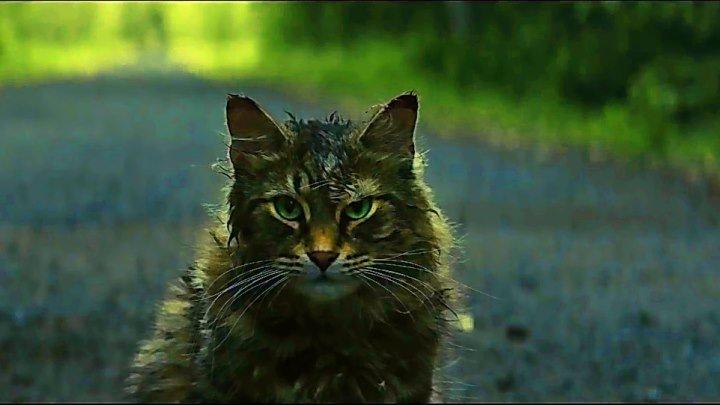 Кладбище домашних животных - Тизерный трейлер (2019)