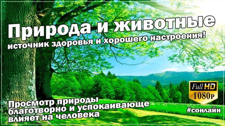 ИСТОЧНИК ХОРОШЕГО НАСТРОЕНИЯ (Природа и животные) от СОНЛАЙН