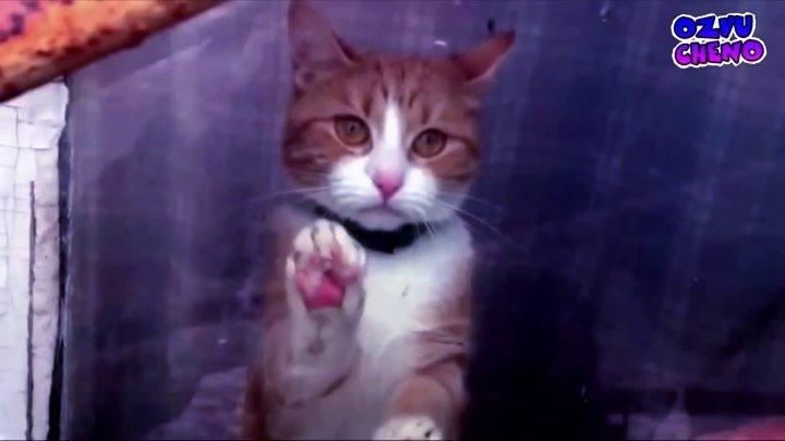Позови Кота С Собой ♫(720p)♫✔
