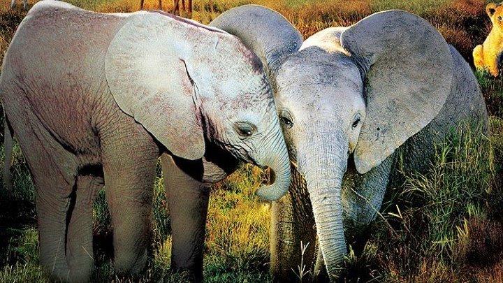 Необыкновенное путешествие: История про двух слонят / Elephant Tales / 2006 / DVDRip