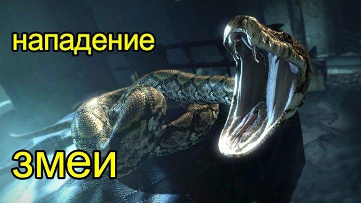 Нападение змеи - реальный скример