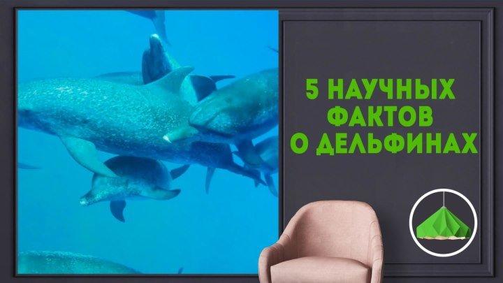 Научные факты о дельфинах
