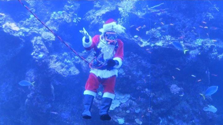 Новый год под водой: в Калифорнии Санта-Клаус поздравил детей из аквариума