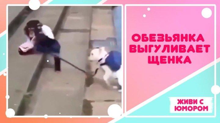 Щенок на выгуле