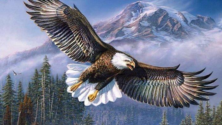 Орел - Царь неба! Интересные факты