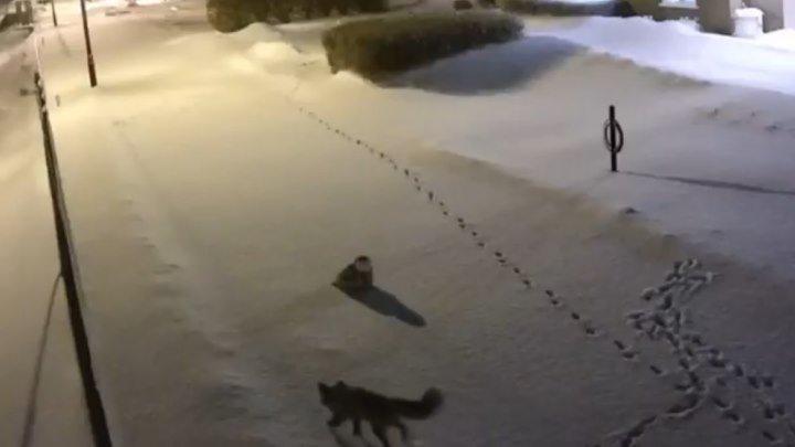 Встреча лисы и совы в зимнюю ночь.