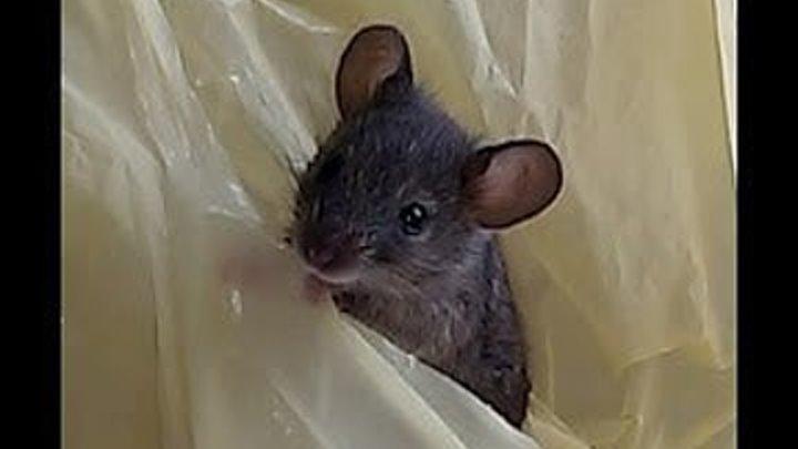 Мышка маленький зверек.