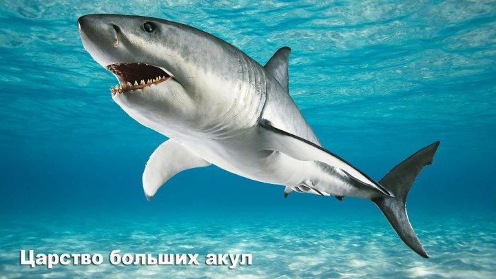 Царство больших акул ( 1080 )