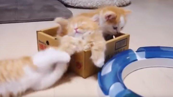 Кошка мама и котятки!) Мимишность зашкаливает!!!