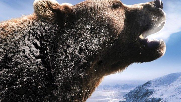 Россия - царство тигров, медведей и вулканов. документальный