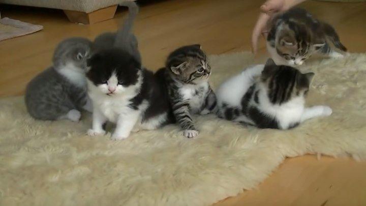 Котятки учатся ходить!!!