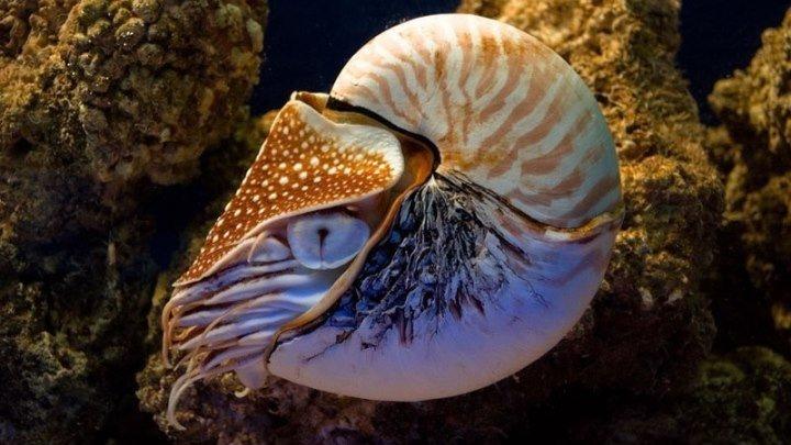 Кусто - 500 миллионов лет на дне моря