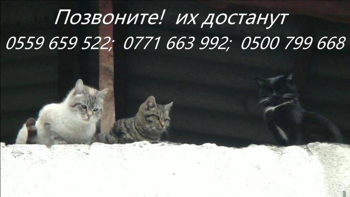 А теперь о кошках из Бишкека