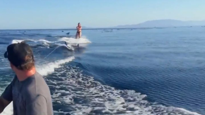 Девушка прокатилась на вейкборде с дельфинами.