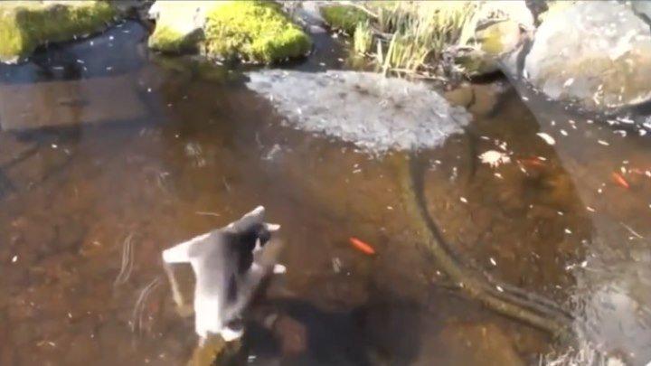 Троллинг кота - рыба подо льдом